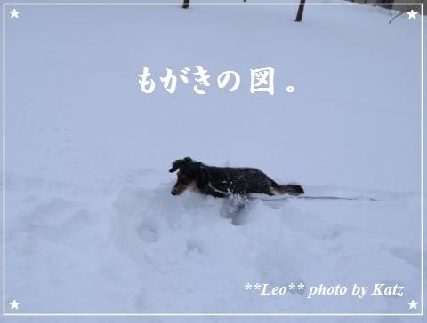 20111211 Leo (6)