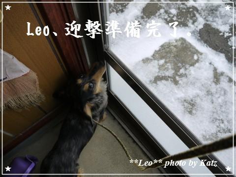 20111211 Leo (1)