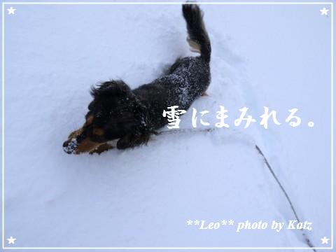 20111211 Leo (2)