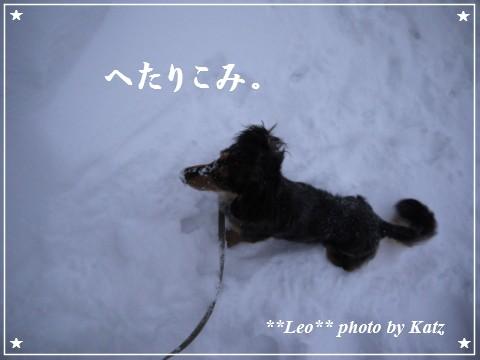 20111230 Leo (5)