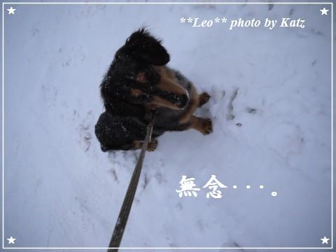 20111230 Leo (6)