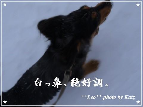 20111230 Leo (7)