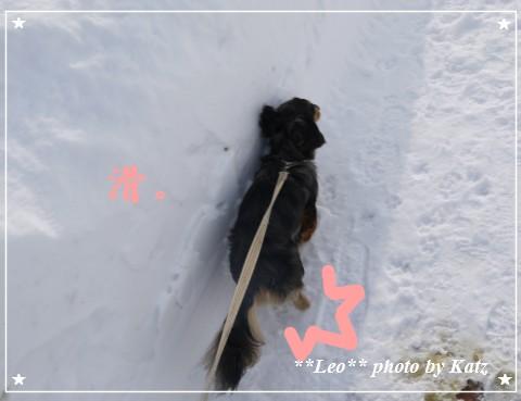 20120107 Leo (17)