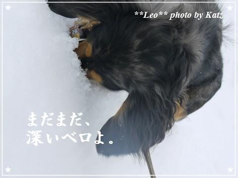 20120109 Leo (6)