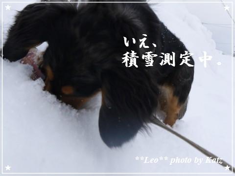 20120109 Leo (4)