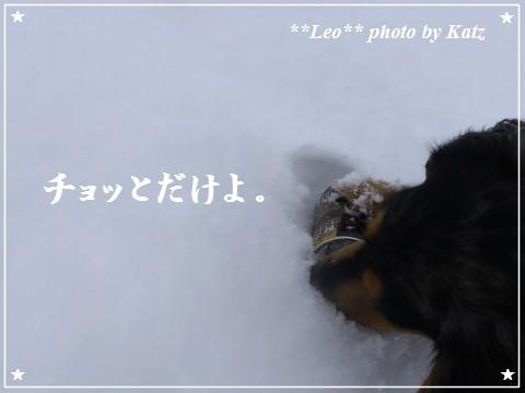 20120109 Leo (1)