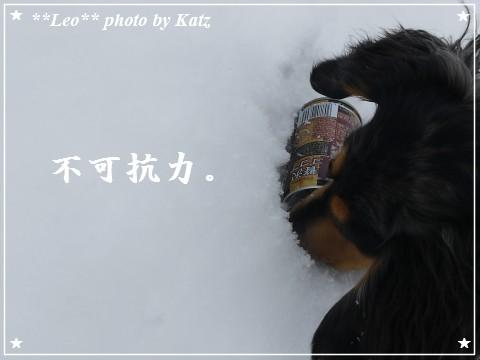 20120109 Leo (7)