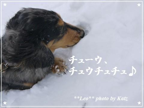 20120115 Leo (4)