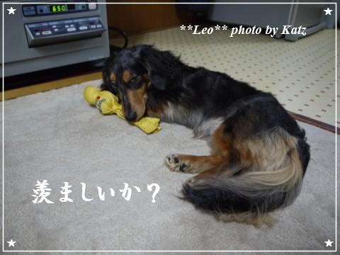 20120206 Leo (6)