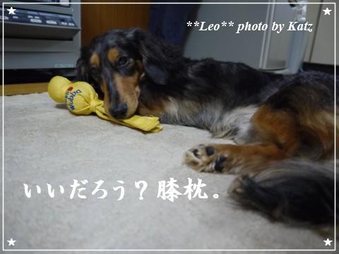 20120206 Leo (2)