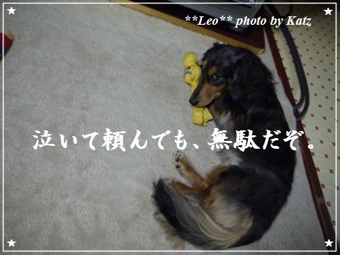 20120206 Leo (7)