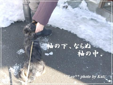 20120219 Leo (7)