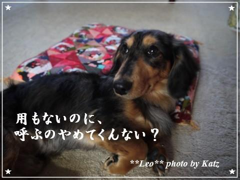 20120220 Leo (5)