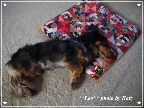 20120220 Leo (1)