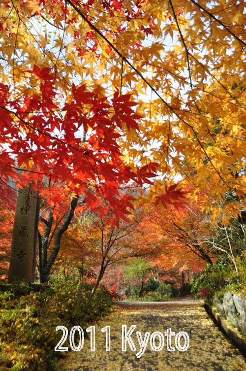 12月1日京都