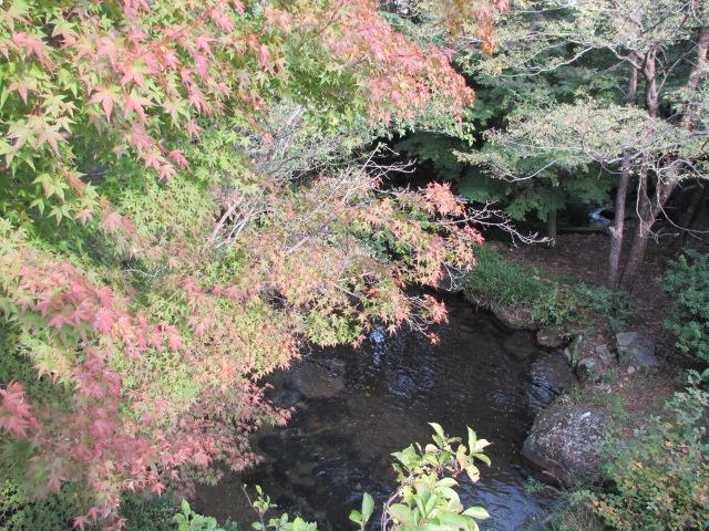 吊り橋の紅葉4