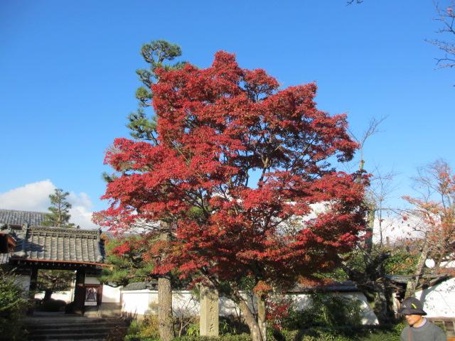 天龍寺の紅葉1