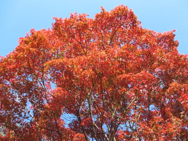 天龍寺の紅葉2