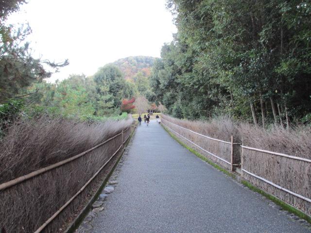 保津川までの道2