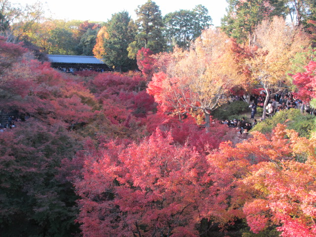 通天橋からの紅葉6