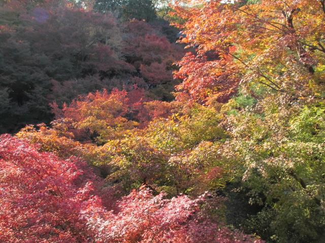 通天橋からの紅葉8