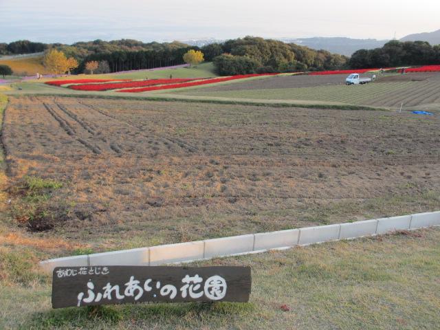 あわじ花さじき2013年11月-10