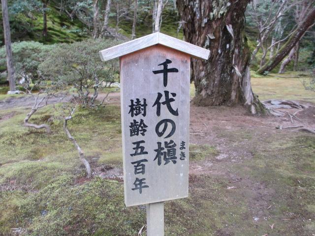 銀閣寺 千代の槇