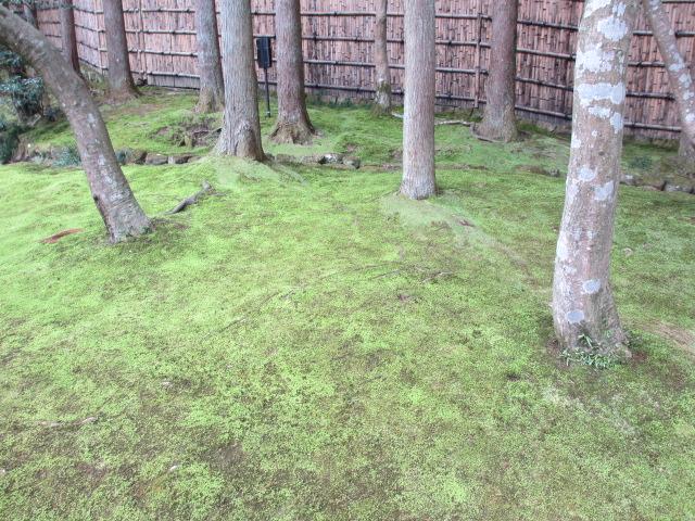銀閣寺 山道4 苔の絨毯