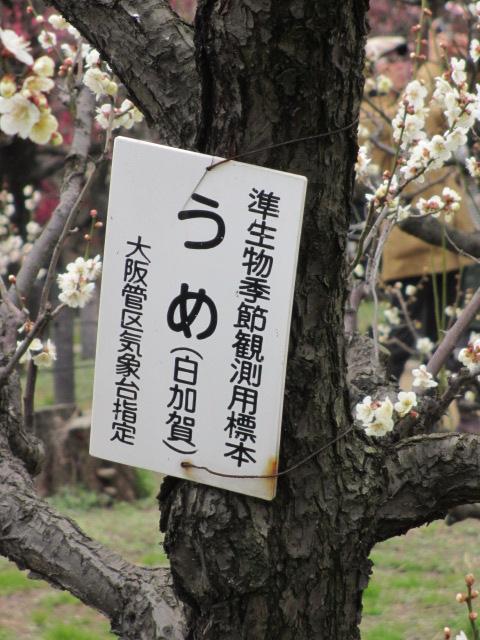 大阪城公園 白加賀2