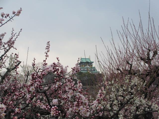 大阪城公園 梅林越しに大阪城