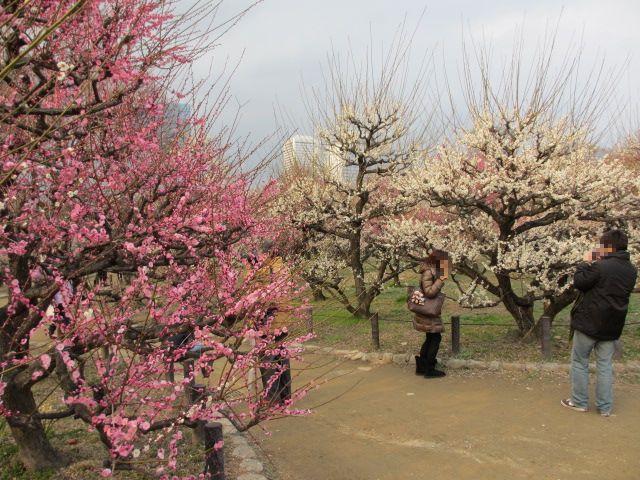 大阪城公園 梅林29