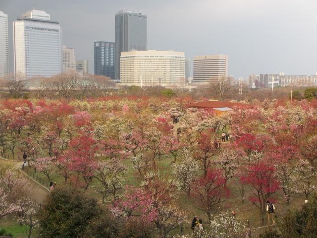 大阪城公園 梅林見下ろし