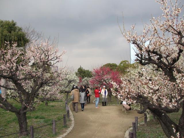 大阪城公園 梅林32