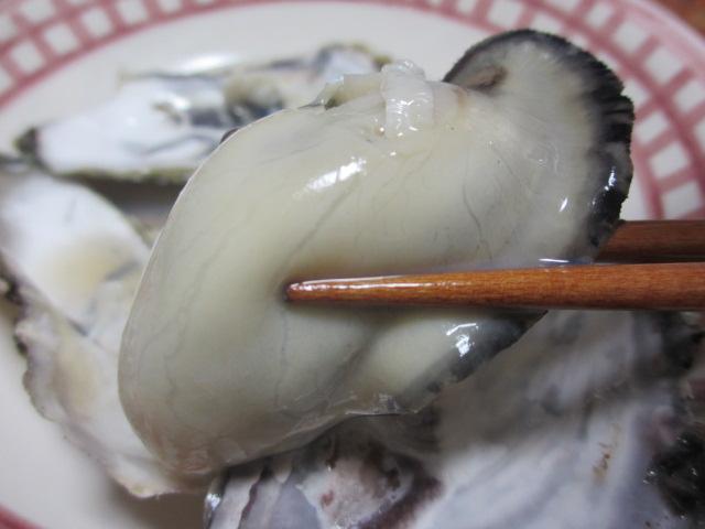 室津牡蠣4