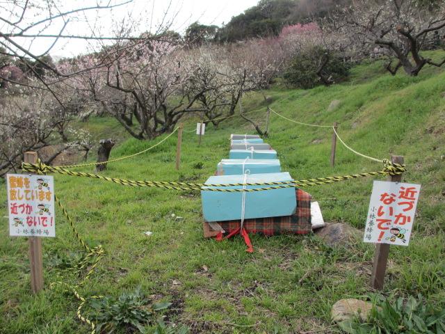 綾部山梅林 養蜂場