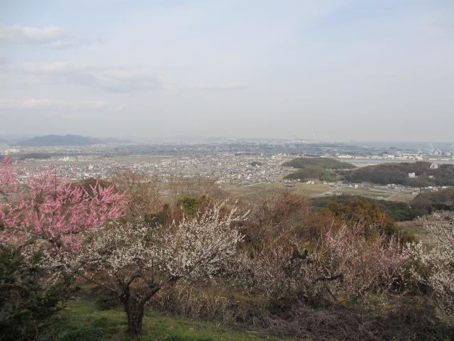 綾部山梅林 頂上からの絶景2