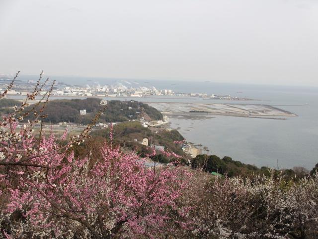 綾部山梅林 頂上からの絶景