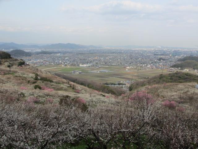 綾部山梅林 下り絶景2