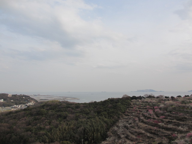 綾部山梅林 瀬戸内海を眺める2