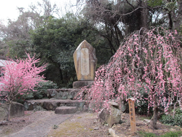 綾部山梅林 入口前の梅