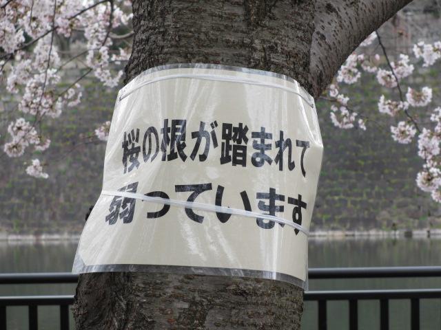 大阪城公園 外濠前 桜2