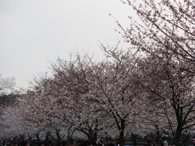 大阪城公園 外濠沿い2