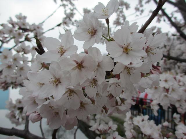 大阪城公園 外濠沿い5