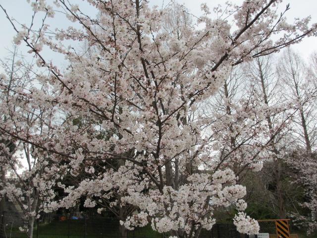 大阪城公園 外濠沿い6