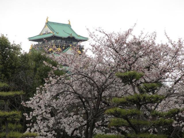 大阪城公園 天守閣へ6