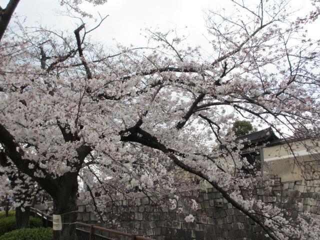 大阪城公園 内濠沿い2