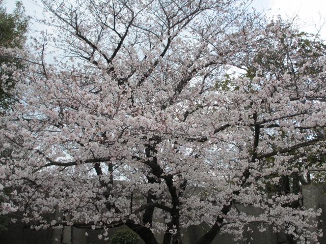 大阪城公園 桜門中