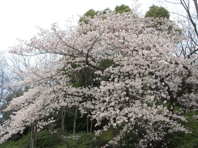 大阪城公園 天守閣前2
