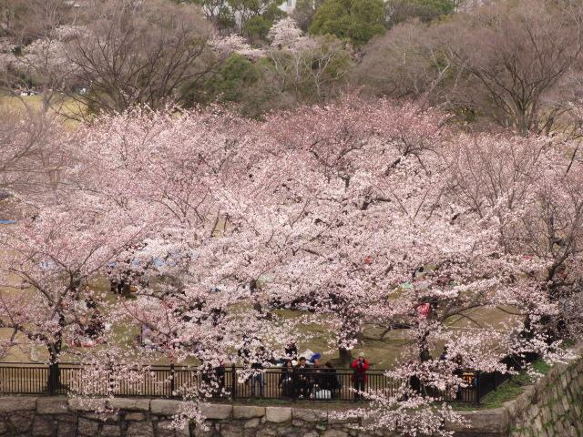 大阪城公園 西の丸庭園見下ろし2