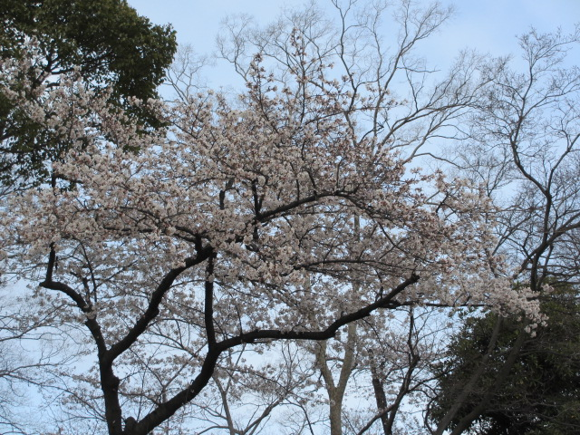 大阪城公園 内濠沿い4